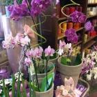 Orchidee 02