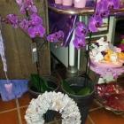 Orchidee 03