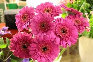 Bos bloemen 02