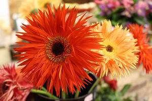Bos bloemen 03