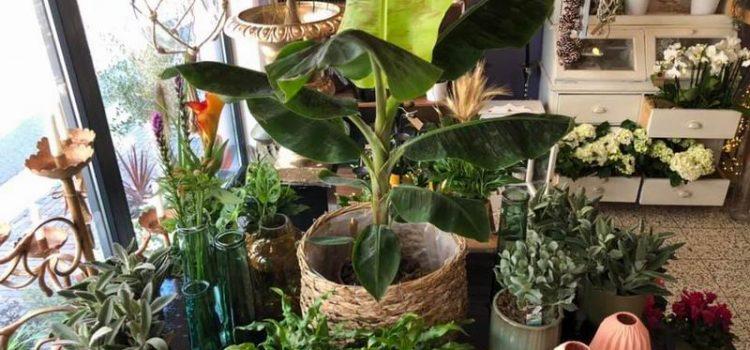 Nieuwe potjes en planten